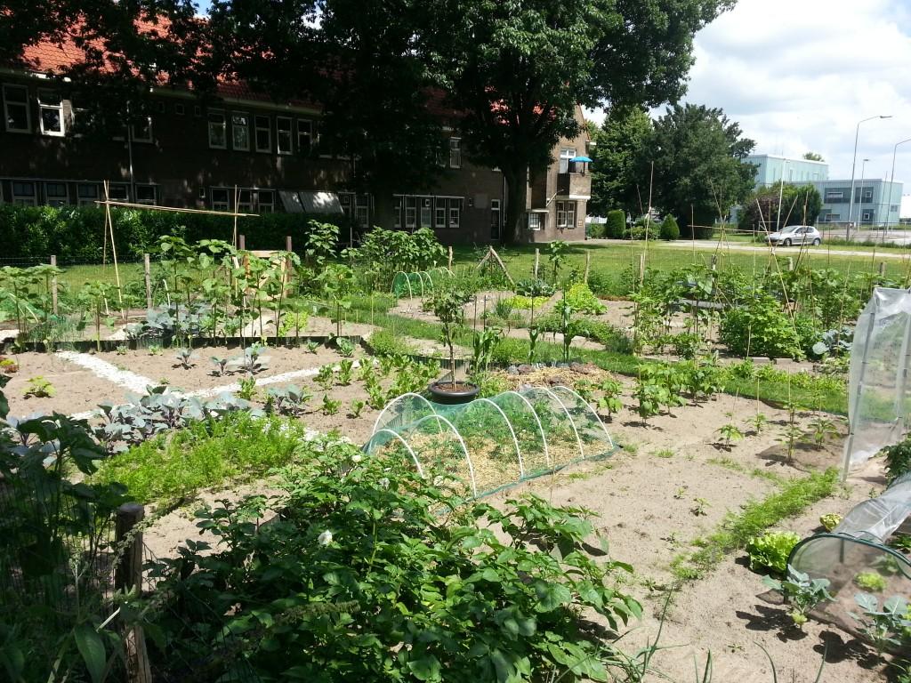 In Boxtel ligt naast Lindenlust een buurtmoestuin die de leefbaarheid in de gehele buurt verbetert.