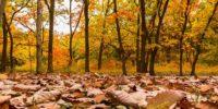 Is jouw woning herfstbestendig?