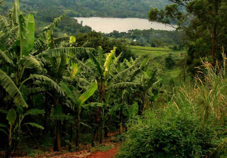 Greenchoice compenseert CO2 uitstoot met bosprojecten