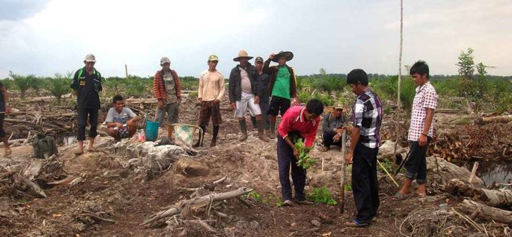 Greenchoice bosproject Rimba Raya - Interveste
