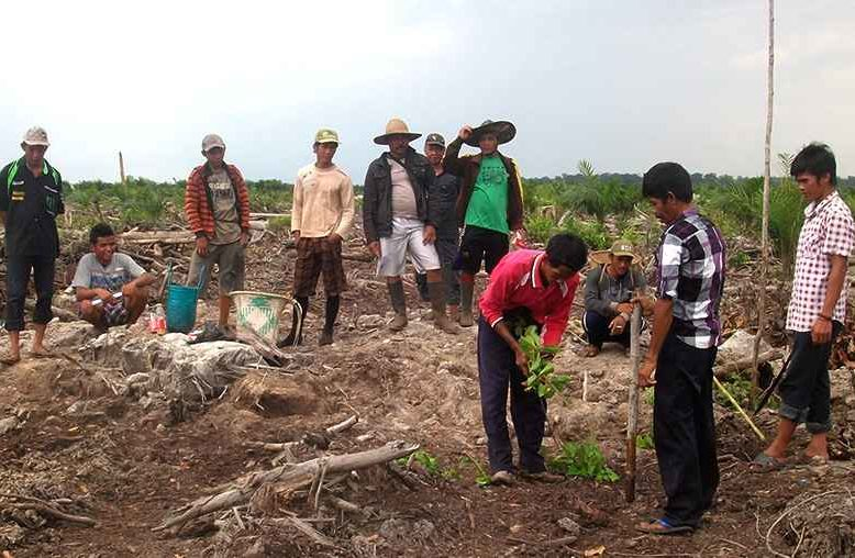 Greenchoice bosproject – Indonesië