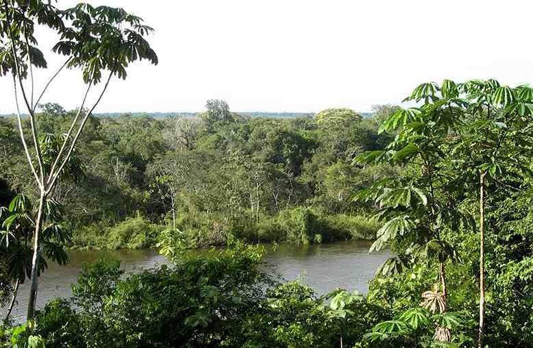 Greenchoice Bosproject – Amazonas, Brazilië, Zuid-Amerika