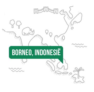 Borneo Indonesie Greenchoice