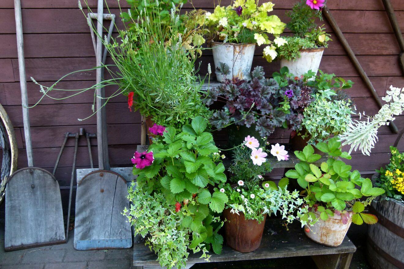 bloemen en planten in pot naast schep
